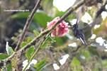 reserva orejiamarillo colibrí 20