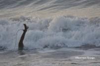 Piyi surf 2