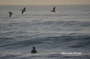 Piyi surf 23