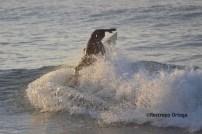 Piyi surf 25