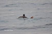 Piyi surf 8