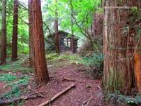 SF Muir Woods 2