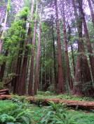 SF Muir Woods 5