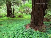 SF Muir Woods 8