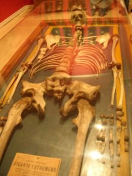 Esqueleto de hombre gigante. Museo Nacional Antropología (Madrid). Foto: Marta Menacho.