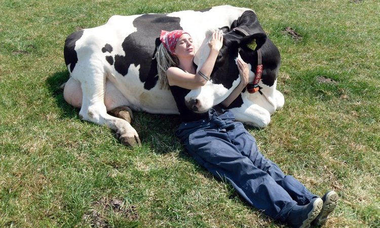 'Cow Cuddling' Is Apparently A Thing Now And It Costs $300 For A 90-Minute Session