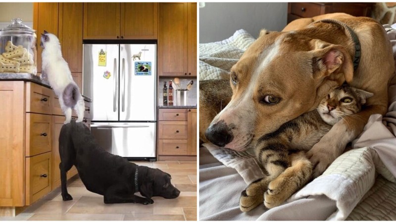 These 18 Photographs Show That Dogs & Cats Have Their Own Sort of Connections