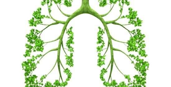 Lungs - tree