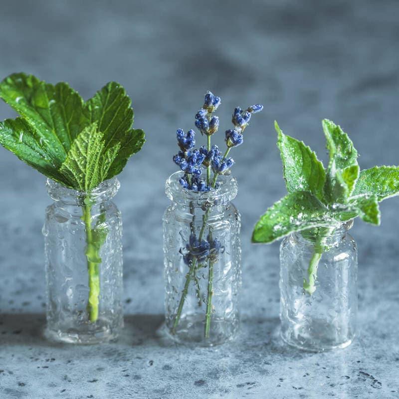 Puterea ierburilor Aromatice : Ce tratează Salvia, Rozmarin-ul, Oregano și Cimbru