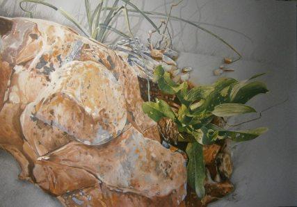 tzan-lio-morfes (1)