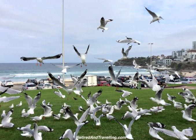 Birds at Bondi Beach - South To Bondi Beach.jpg