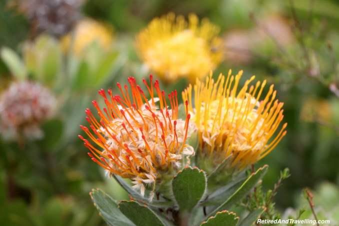 Leucospermum Garden - Relax in Kirstenbosch Gardens.jpg