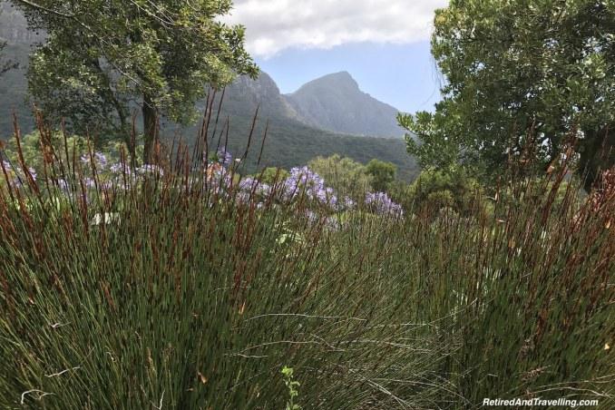 View Point View - Relax in Kirstenbosch Gardens.jpg