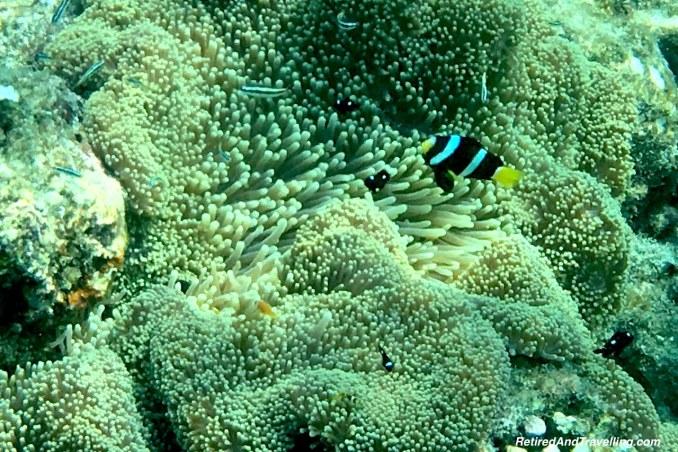 Nemo Fish - Snorkelling in the Maldives.jpg