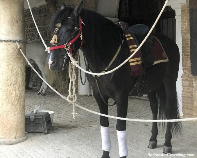 Horses - Andalusian Horse Show In Córdoba.jpg