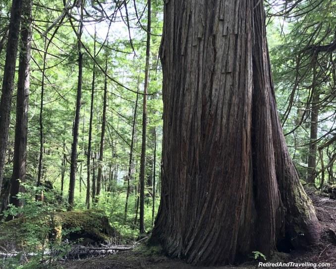 Ketchikan Rainforest Excursion - Alaska Cruise From Seattle.jpg