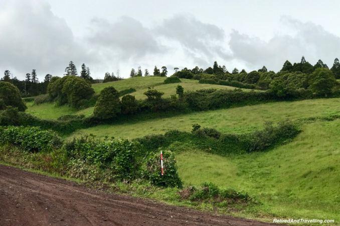 Cedros Viewpoint Greenery - Full Day Tour of Faial Island.jpg