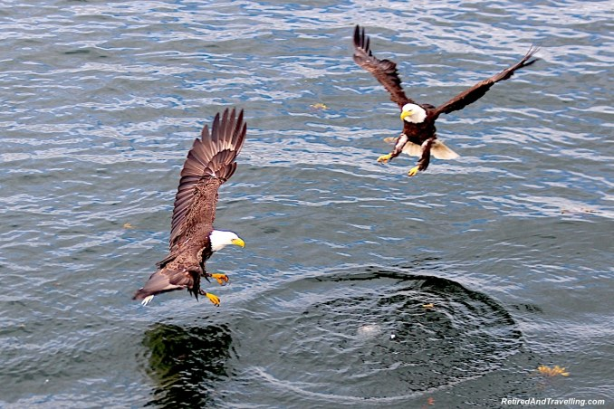 You May See Eagles - Planning An Alaska Cruise.jpg
