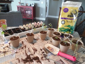 repotting seeds