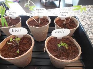 seed pots