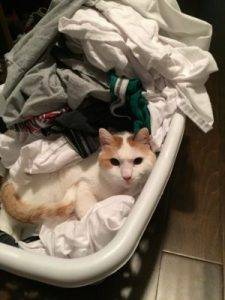 laundry basket cat