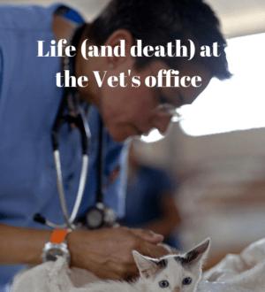 vets office