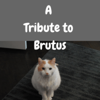 A Tribute to Brutus
