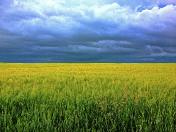 barley-247833