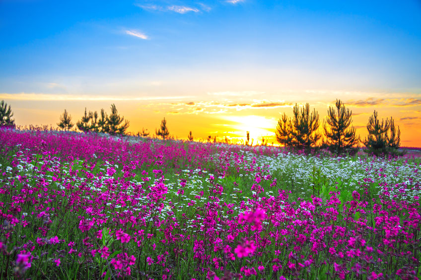 24362402 - sunrise and flowers scenery