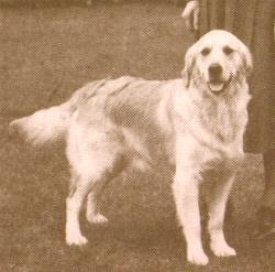 early-light-colored-dog