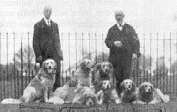 His later dogs were all heavy and coarse.