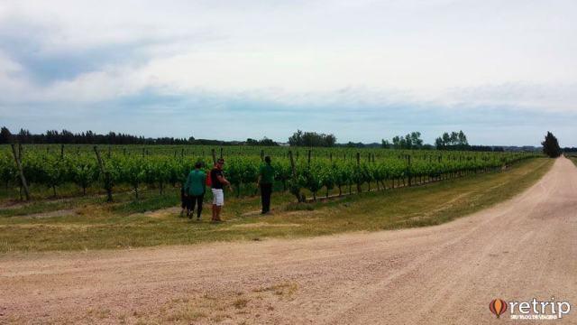 Plantações da vinícola Bodega Juanicó, em Montevidéu