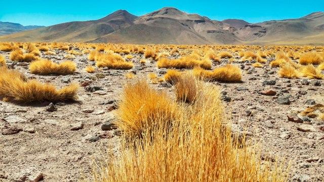 Lagunas Altiplânicas em San Pedro de Atacama, Deserto de Atacama