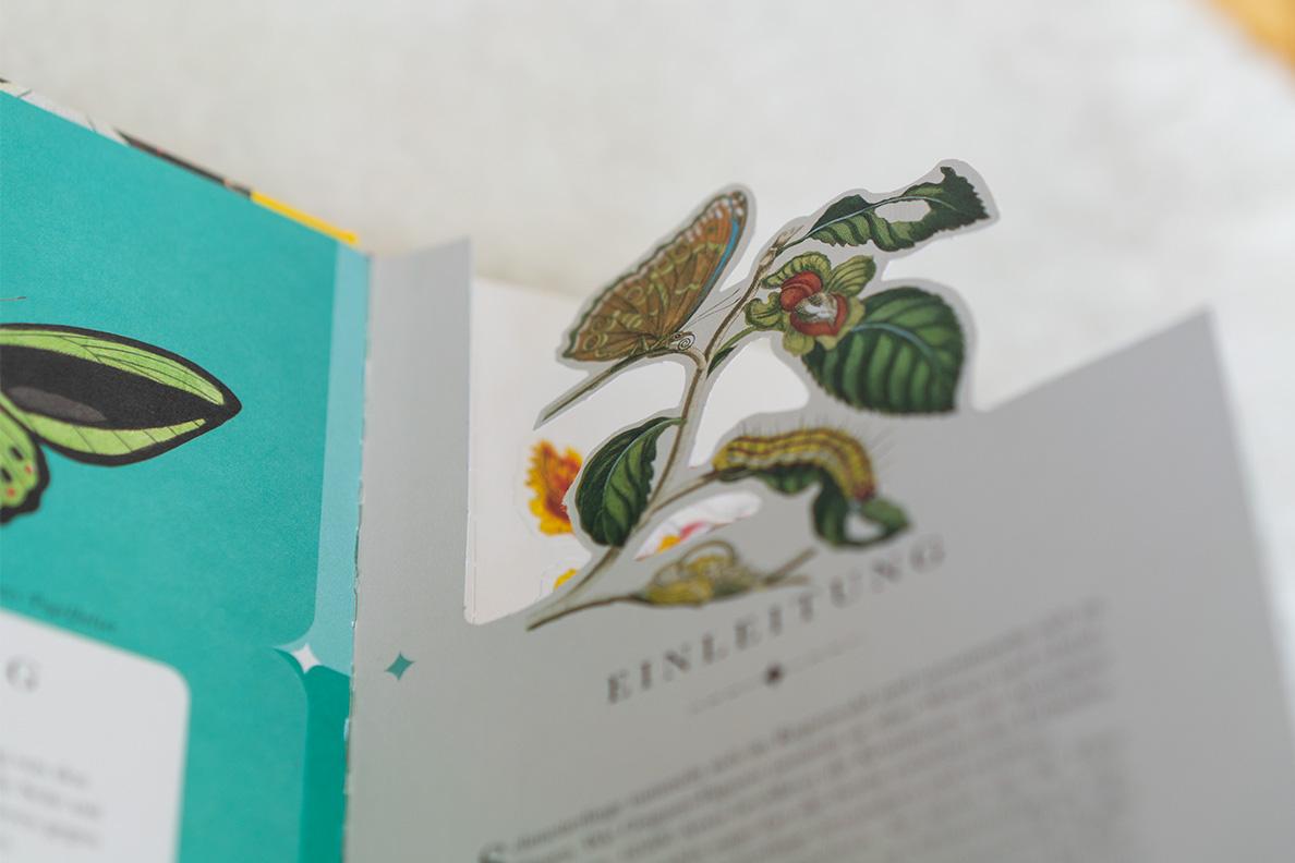 Eine Seite im Buch Die 50 schönsten Schmetterlinge der Welt vom DK Verlag