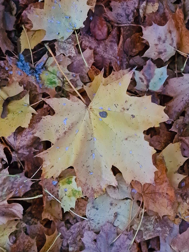 Buntes Herbstlaub in den Münchner Parks