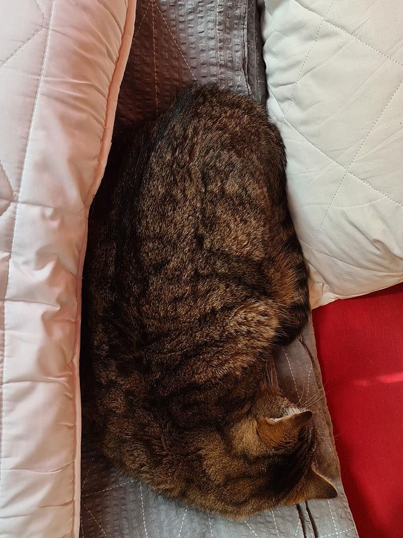RetroCats Katze schläft zwischen zwei Kissen