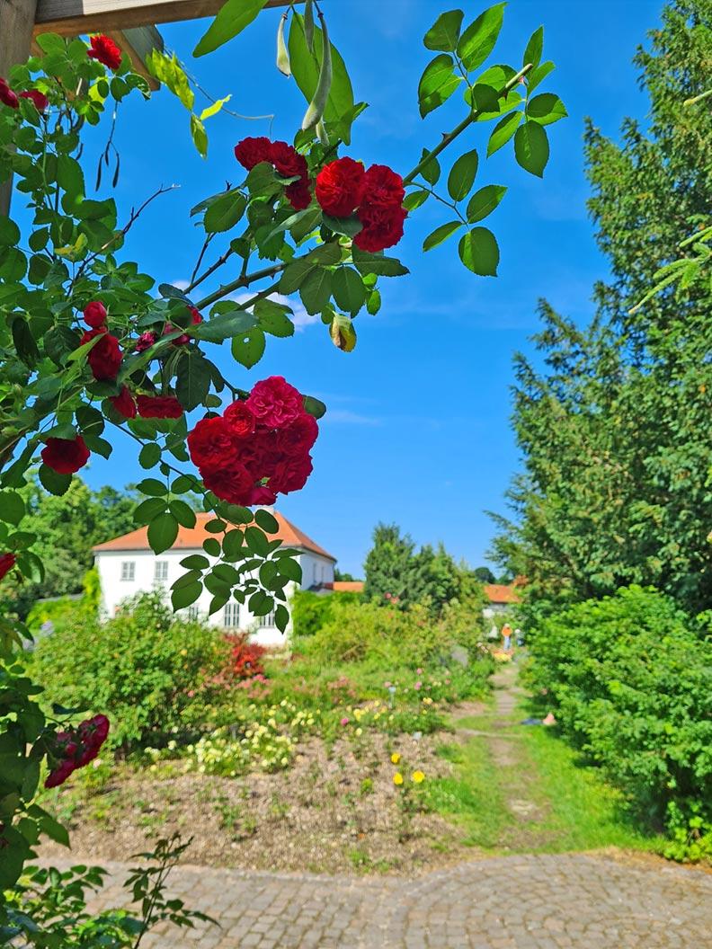 Ausflugstipp: Ein Blick in den Rosengarten in München
