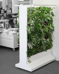 Sagegreenlife has partnered with Gensler to create a double-sided green partition known as Verdanta.