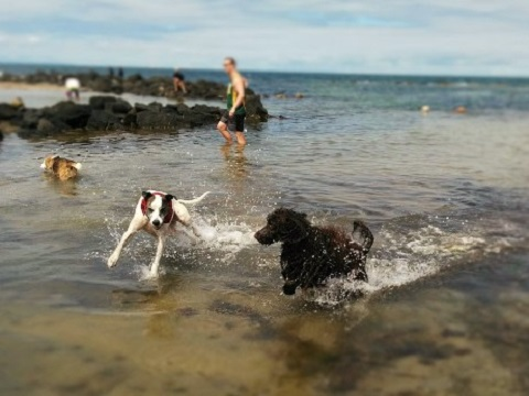 Dog Beach 10