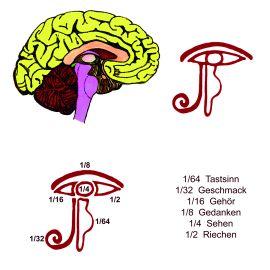 Zirbeldrüse, drittes Auge