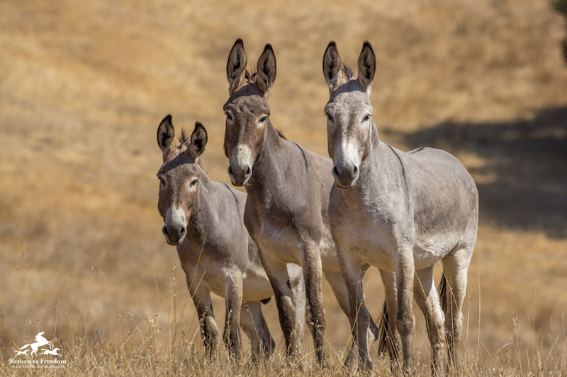Burros SLO -Kaitlynn Toay's July 2018 copy