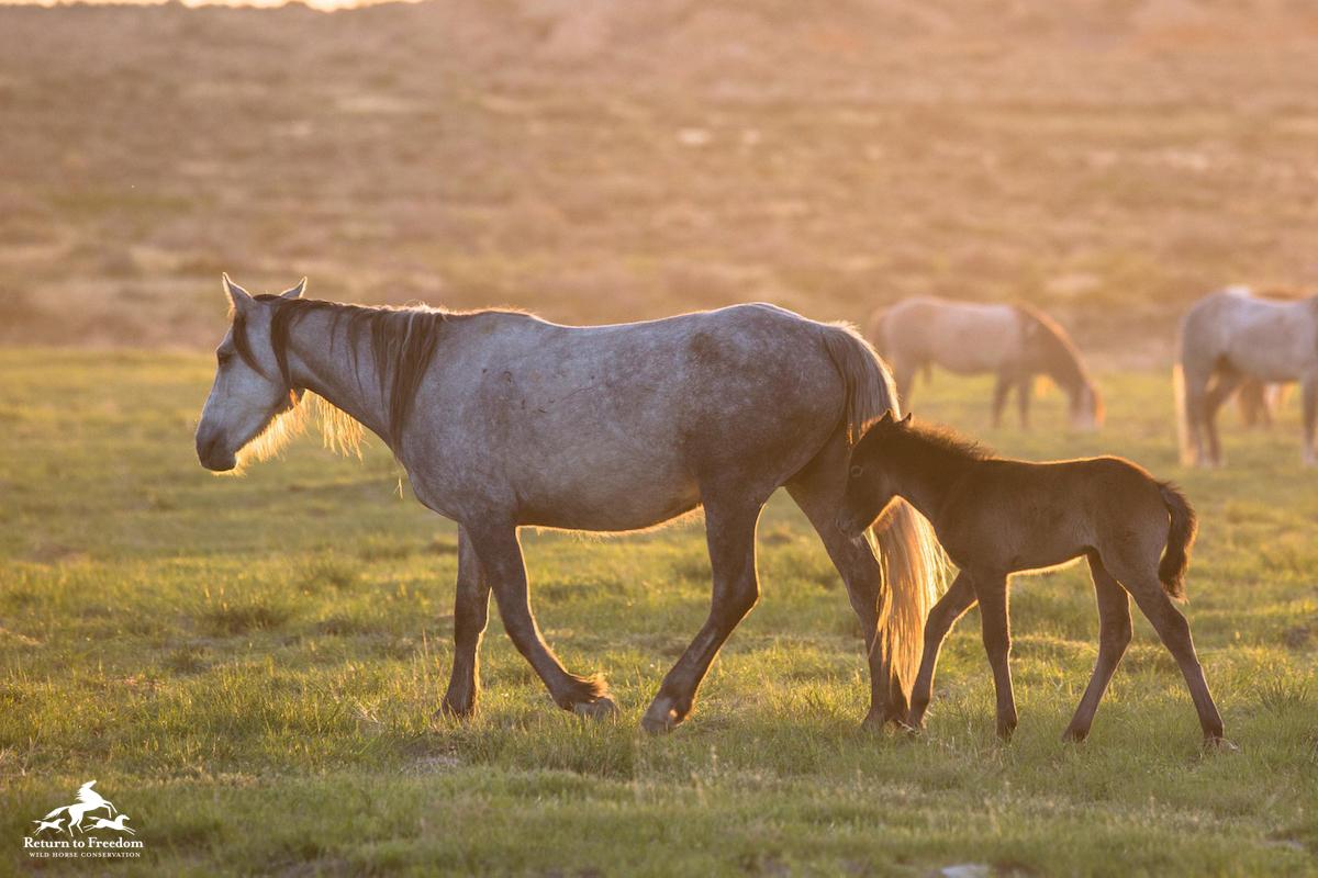 Onaqui mare and foal – meg f