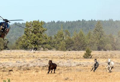 Devil's Garden Wild Horse Roundup