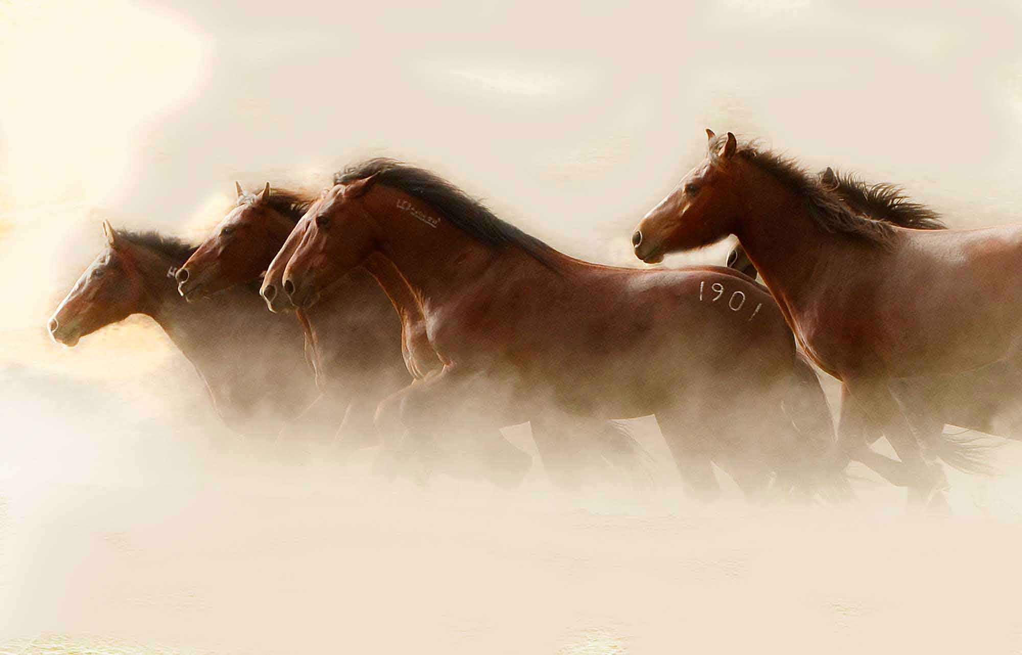 horse-bg-1