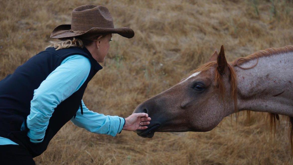 nan and rtf horse
