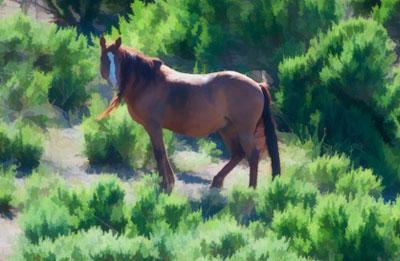 Sheldon Wild Horse