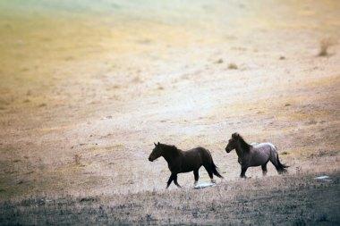 American Wild Horses