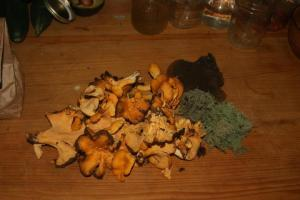 Foragers Delight