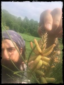 pine pollen border