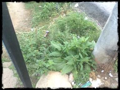 03 - plants on road